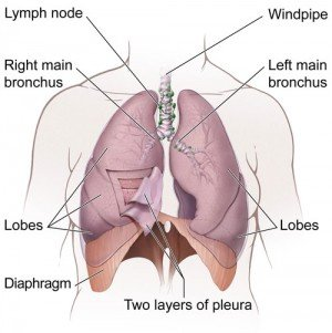 lung cancer, Oncology Hematology Care, OHC, Cancer Treatment, Cincinnati Cancer Treatment, cancer, cancer help, cancer care