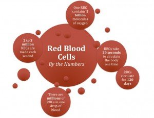 OHC Red Blood Cells Facts