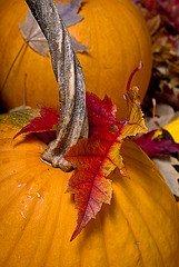 OHC Pumpkins