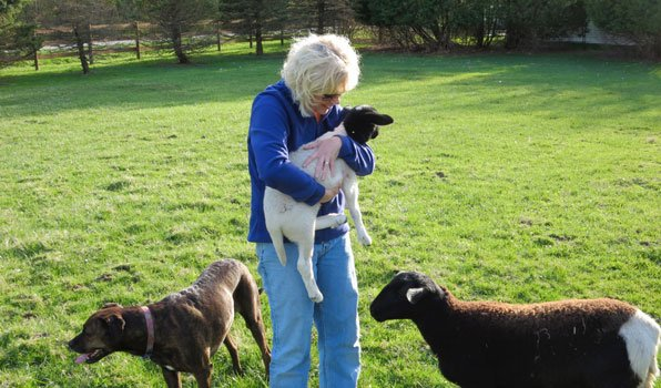 Lisa-Feiler-Breast-Cancer-Baby-Goats-OHC